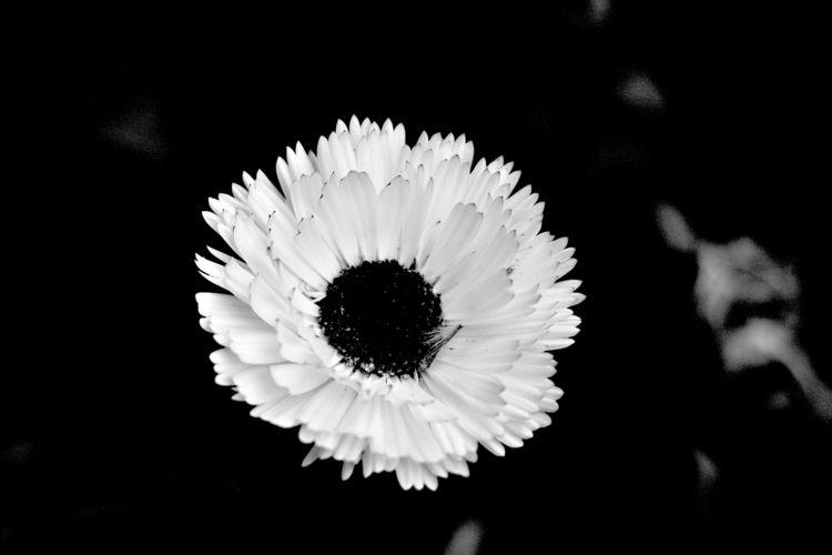 Botanical Monochrome 6953 - flowerphotography - dorian-stretton | ello