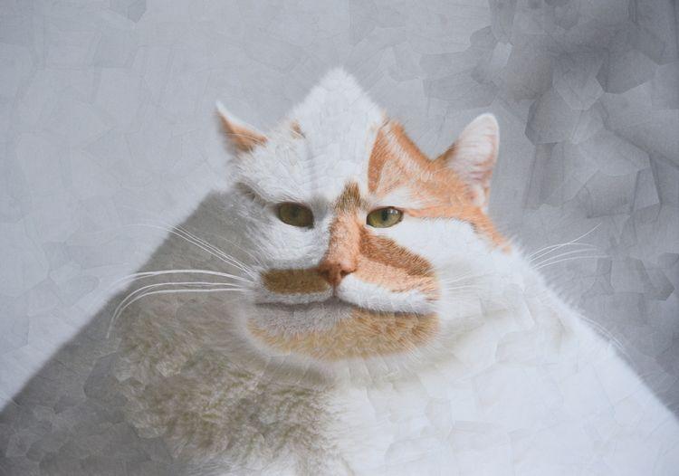 Charlie XXI, 16.5 11.5 inches - cats - loladupre | ello