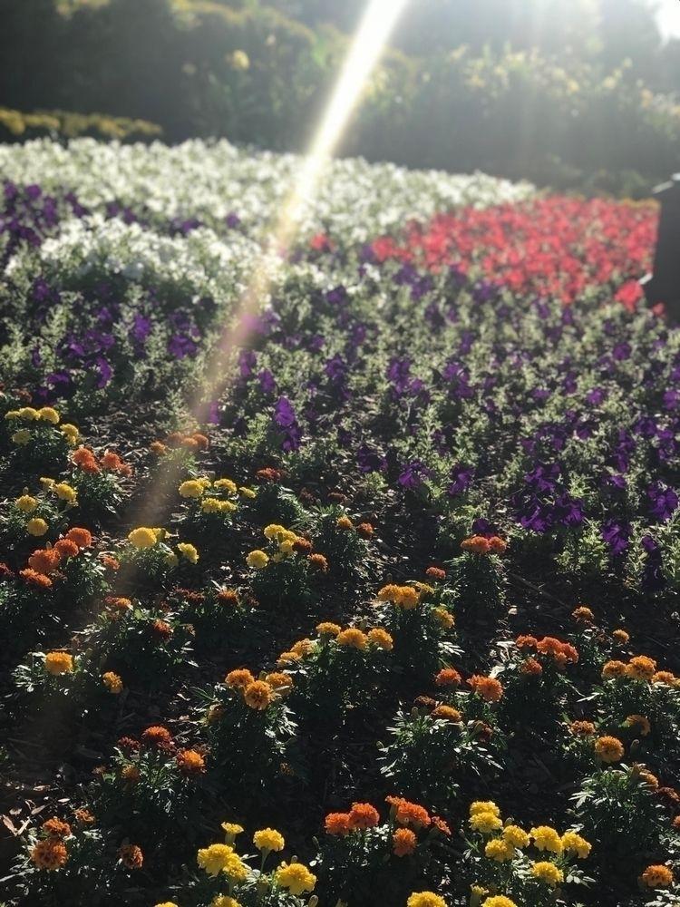 pick - flowers, nature, simple, beauty - cbreedy | ello