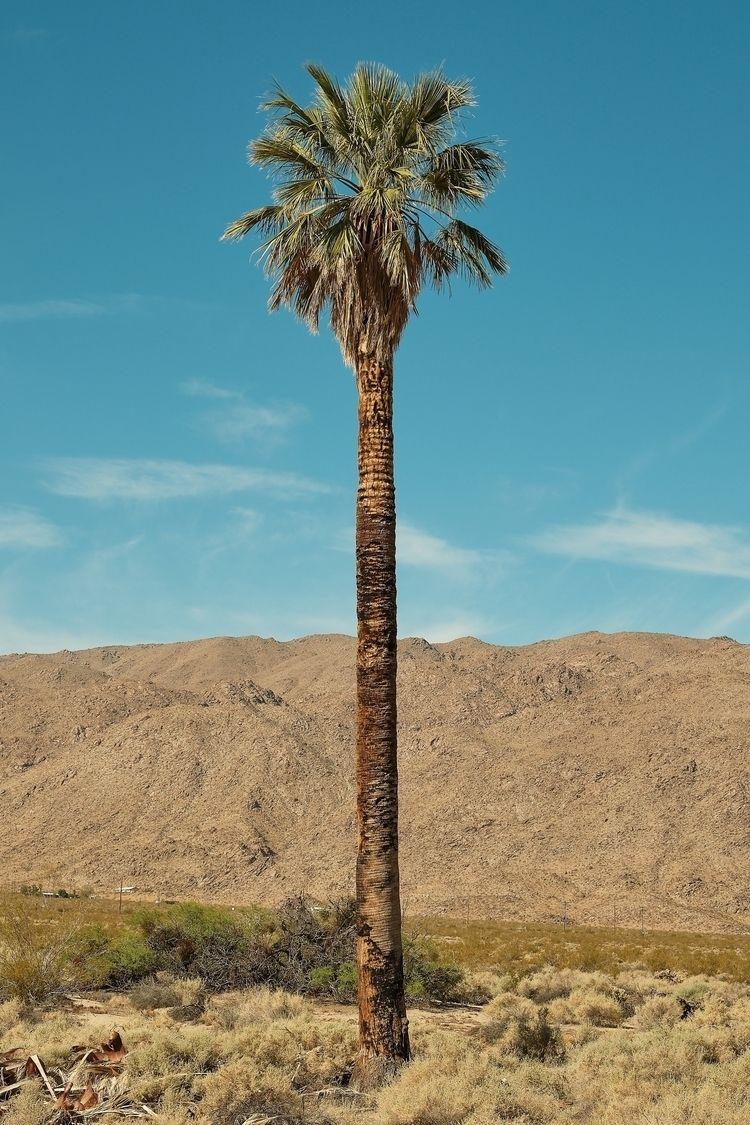 Oasis Mara, California (2019).  - allunderheaven | ello