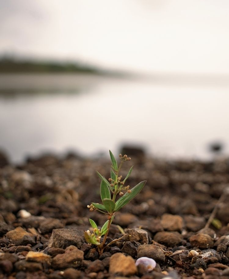 Life takes foot hold shore Uppe - paddyc29 | ello