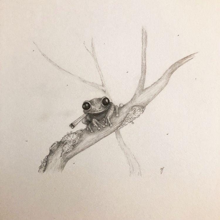 Feelin' froggy - sketch, drawing - mindsketchin | ello