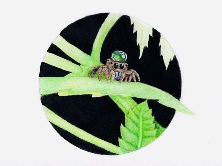 Water hat - drawing, spider - mindsketchin | ello