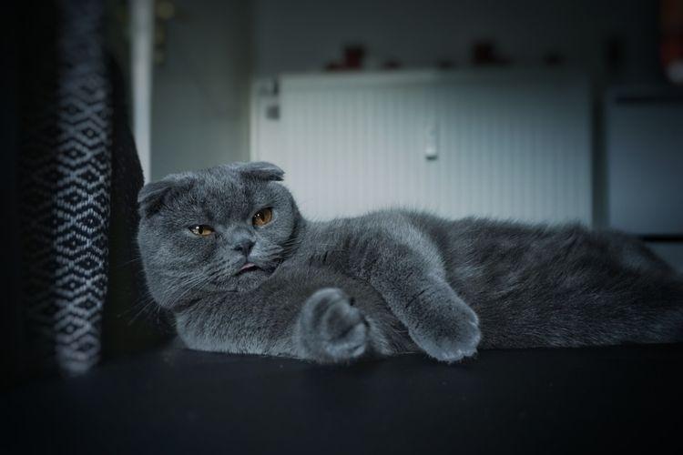chill relax - cats, cat - djf3d3x | ello