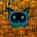 Andy Kehoe (@andykehoe) Avatar