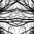 helix Pinecomb (@helixpinecomb) Avatar