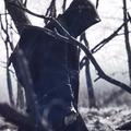 Paul Narcis  (@panacreatives) Avatar