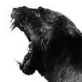 Panther (@gopanther) Avatar