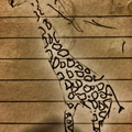 naaamrud (@naaamrud) Avatar