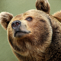 Sir Bearington (@sir_bearington) Avatar