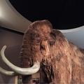 Mammut (@beobachter5081) Avatar