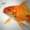 Thinking Fish (@thinkingfishny) Avatar