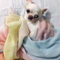 keisha liena (@keishalien) Avatar