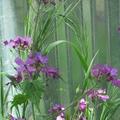 Purple Praise (@purplepraise) Avatar