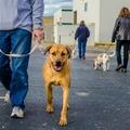 Joey Luke's Dog Training (@joeylukesdogtraining) Avatar