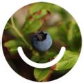 Ello Foraging (@elloforaging) Avatar