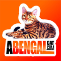 abengalcat.com Criadero Certificado (@abengalcatcom) Avatar