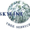 Tree Service Sunshine coast (@skylinetreess) Avatar