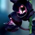 Orchids (@mryo00om) Avatar