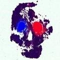 @slip_on_the_rock Avatar