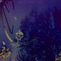 lyyro (@lyyro) Avatar