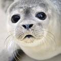 seal (@sealtje44) Avatar