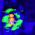 N (@glyphsaur) Avatar