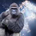 @gorilla4852 Avatar