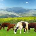 Hunter International Livestock (@hunterinternationallivestock) Avatar