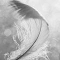 felting treasures  (@feltingtreasures) Avatar