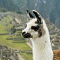 Quechua Kate (@quechuakatie) Avatar