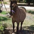 Horseseller (@horseseller) Avatar