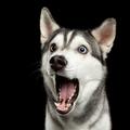 dogdogbha (@dogdogbha) Avatar