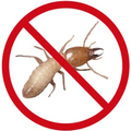 Affordable Termite Control (@affordabletermitecontroloc) Avatar