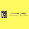 Doodle Run Kennels (@doodlerunkennels) Avatar