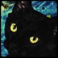(@jackblackcat) Avatar