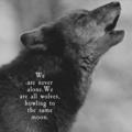 we (@wild-wolf) Avatar