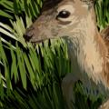 Maria (@the-deer) Avatar