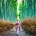 Japon Alternat (@japonalternativo) Avatar
