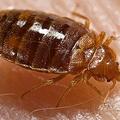 Bed Bug Control Melbourne (@bedbugpestcontrolmelbourne) Avatar