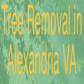 AAA Tree Service (@aaatreeservic2) Avatar