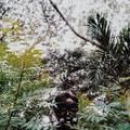 Francis Ivan Ho (@fransiskoho) Avatar