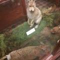 mountain_hare (@mountain_hare) Avatar