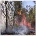 Ô nhiễm môi trường rừng (@onhiemmoitruongrung) Avatar