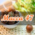 macca47com (@macca47com) Avatar