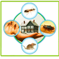 Marks Pest Control in Darlington (@pestcontroldarlington) Avatar