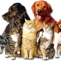 PET SUPPLY ONE (@petsupplyone) Avatar