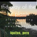 The Way of The 12 Plan (@12plantsperu) Avatar