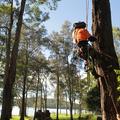 Cutting Edge Tree Maintenance (@arboristnewcastle) Avatar