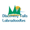 Discovery T (@discoverytails) Avatar